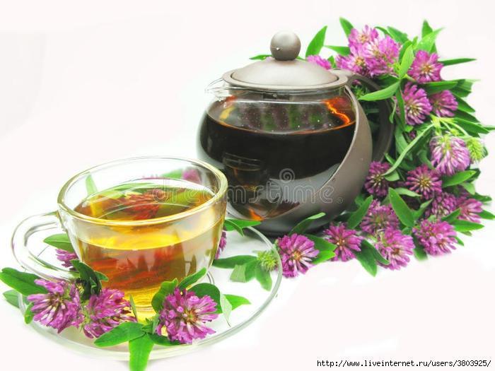 чай-клевера-травяной-розовый-16777357 (700x525, 177Kb)