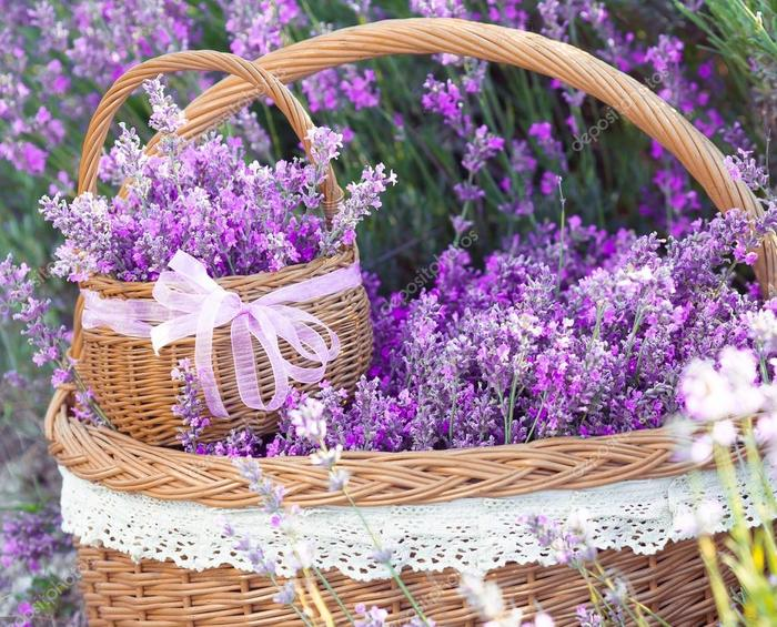 depositphotos_66998643-stock-photo-basket-with-lavender-flowers (700x565, 107Kb)