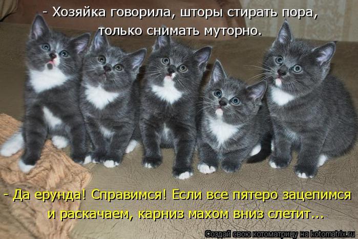 kotomatritsa_0T (700x467, 359Kb)