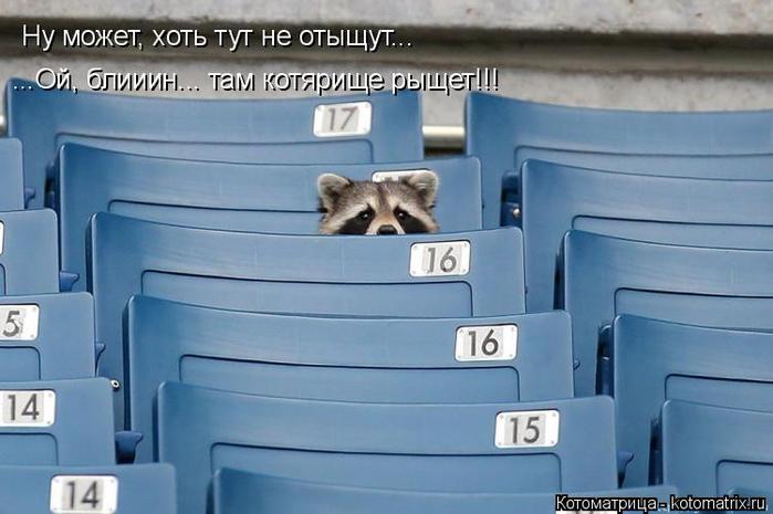 kotomatritsa_8M (700x465, 260Kb)