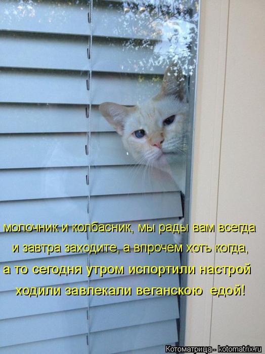 kotomatritsa_A (1) (524x700, 360Kb)