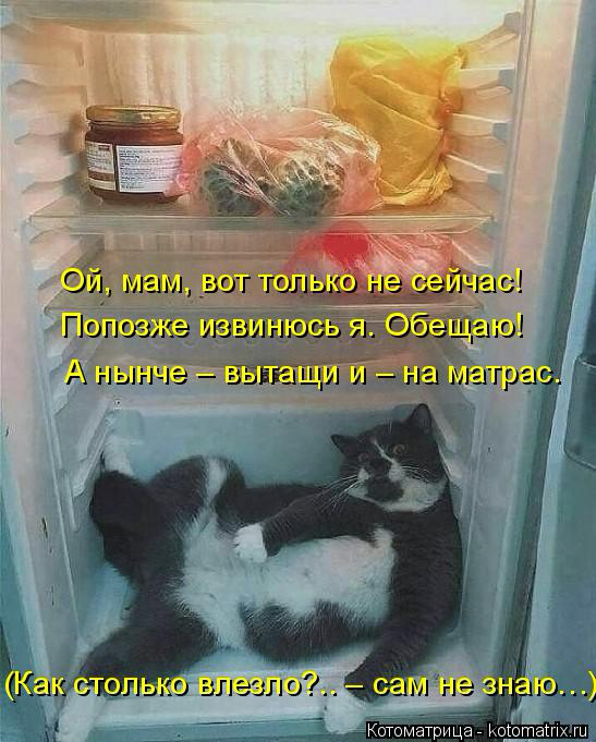 kotomatritsa_b (1) (547x681, 284Kb)