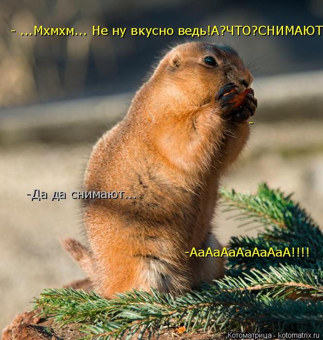 kotomatritsa_Ct (664x700, 476Kb)