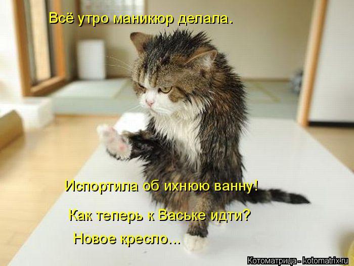 kotomatritsa_K (700x525, 234Kb)