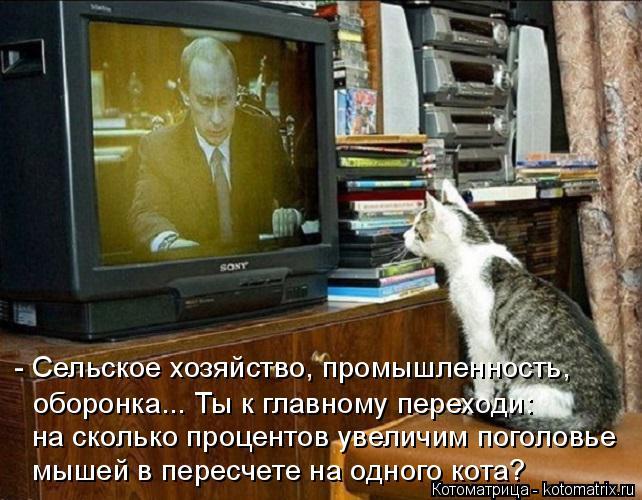 kotomatritsa_M (642x500, 284Kb)