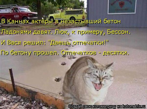 kotomatritsa_O (600x445, 223Kb)