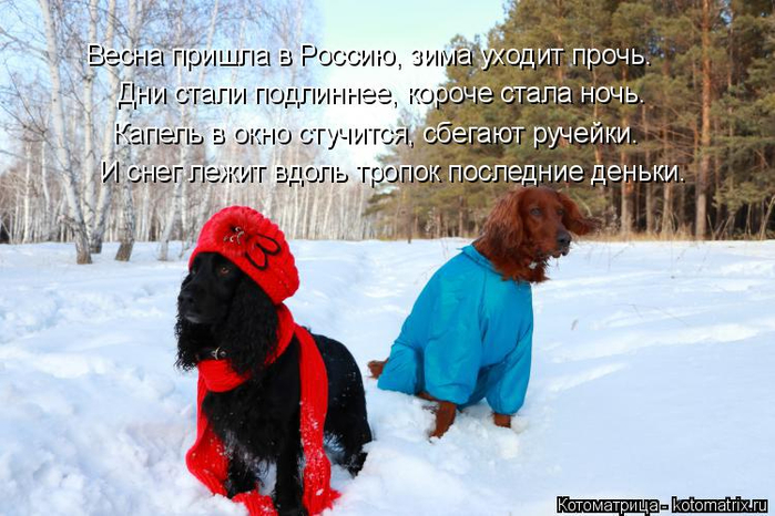 kotomatritsa_P (700x466, 361Kb)