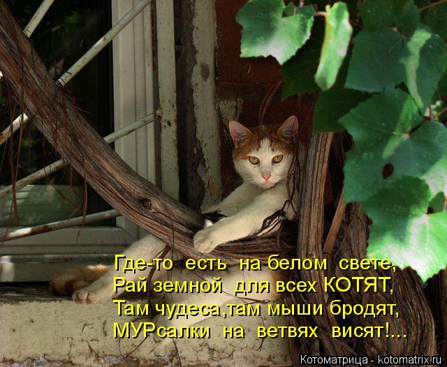 kotomatritsa_T (1) (640x526, 312Kb)