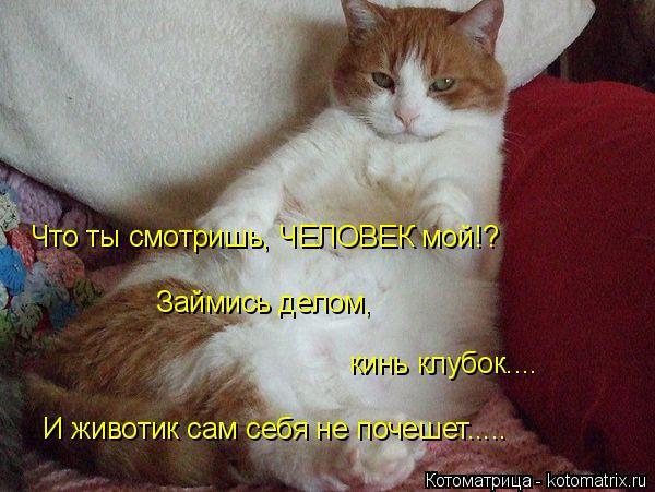 kotomatritsa_T (3) (600x451, 231Kb)