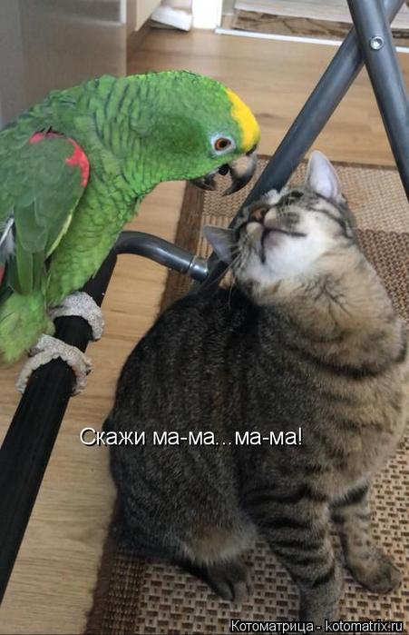 kotomatritsa_uJ (451x700, 278Kb)