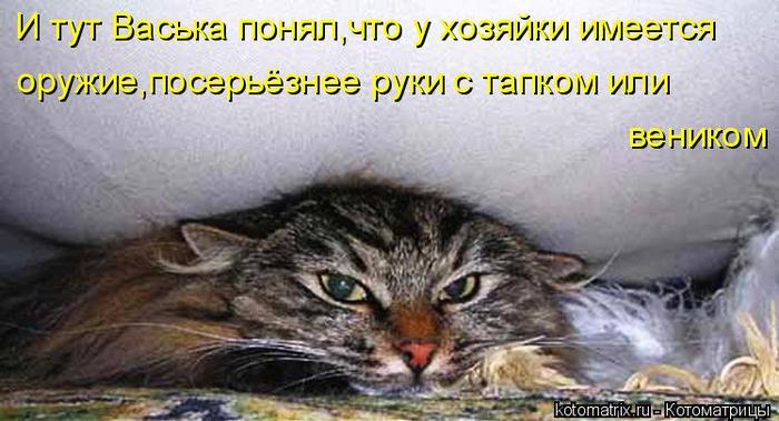 kotomatritsa_y (1) (700x379, 276Kb)