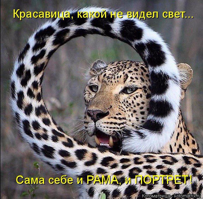 kotomatritsa_3d (700x685, 459Kb)