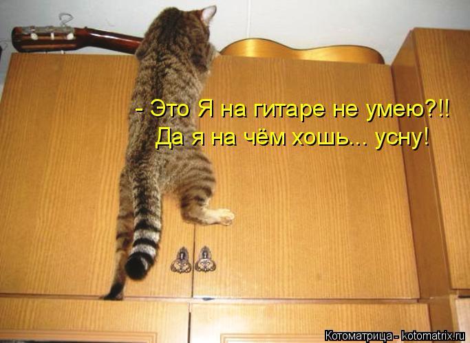 kotomatritsa_Ac (683x499, 221Kb)