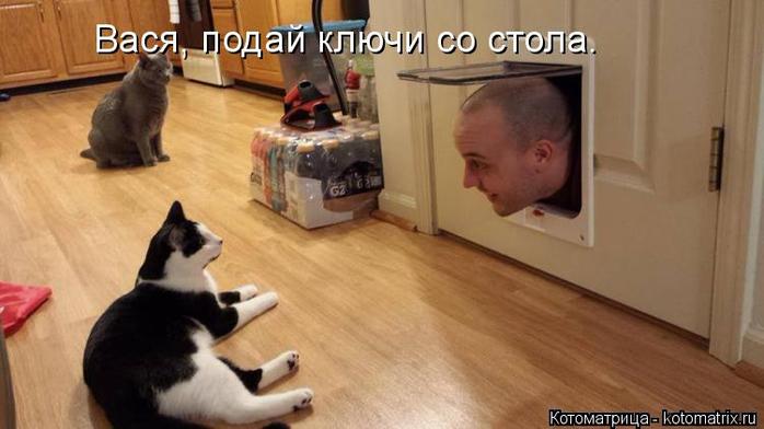 kotomatritsa_D (700x392, 232Kb)