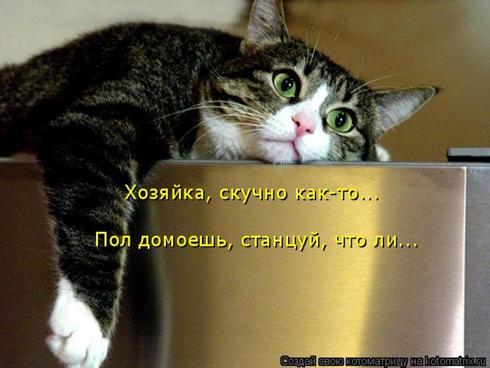 kotomatritsa_P (700x524, 352Kb)