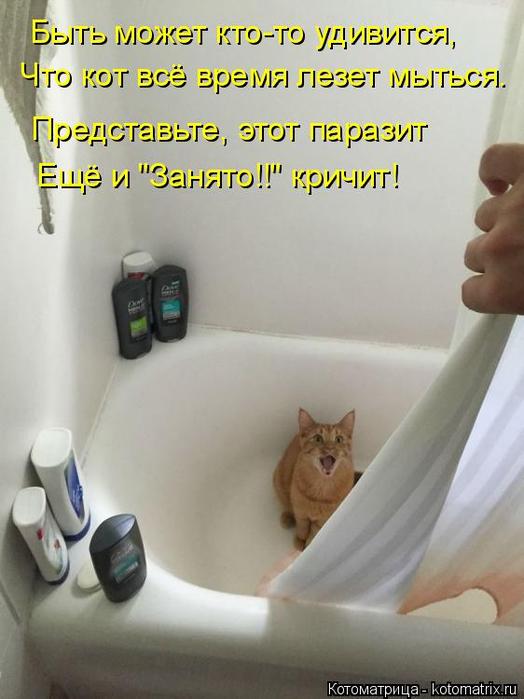 kotomatritsa_Ys (524x700, 282Kb)