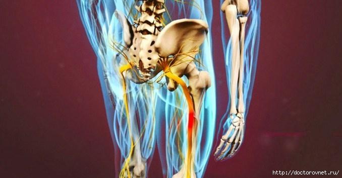 Разблокируй седалищный нерв. Упражнения для седалищного нерва
