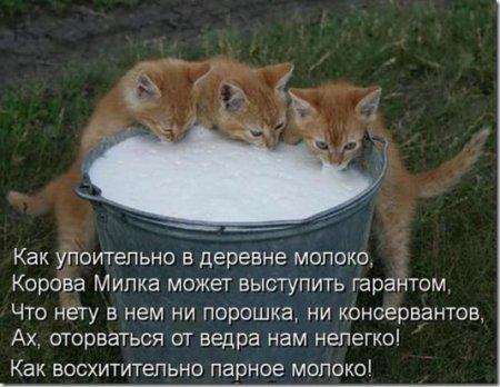 1371392271_36 (450x348, 39Kb)