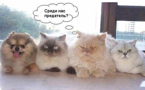 koty_i_sobaki_01 (550x342, 16Kb)