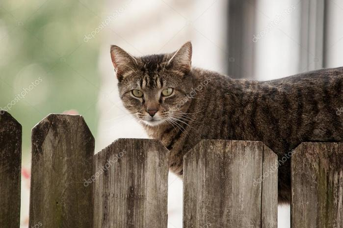 depositphotos_64308283-stock-photo-cat-on-fence (700x464, 49Kb)