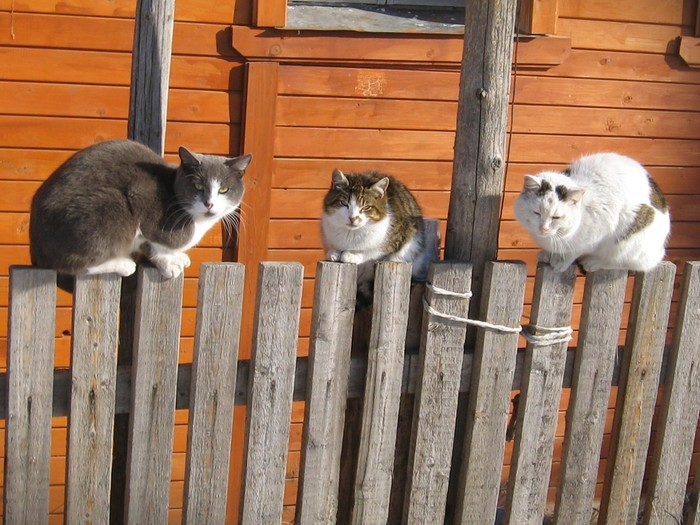 мартовские коты (700x525, 116Kb)