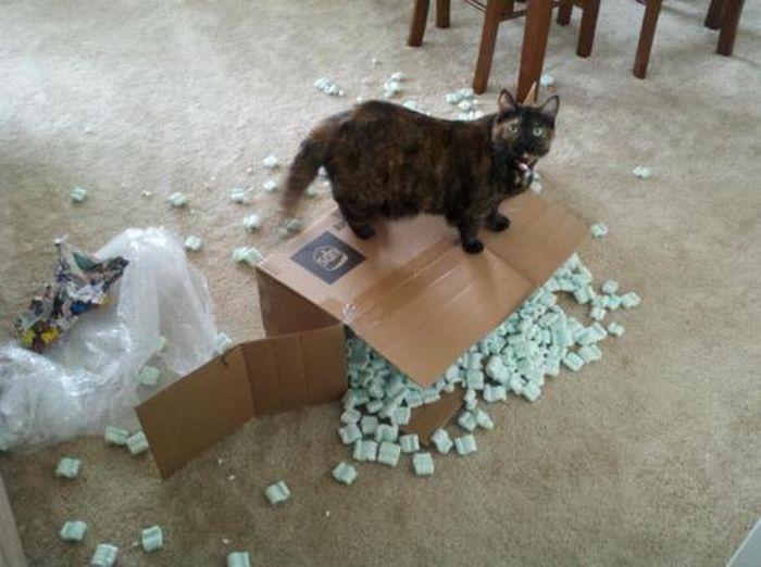 1330176382_cats_54 (700x522, 52Kb)