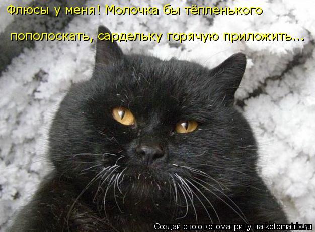 kotomatritsa_o3 (626x462, 184Kb)