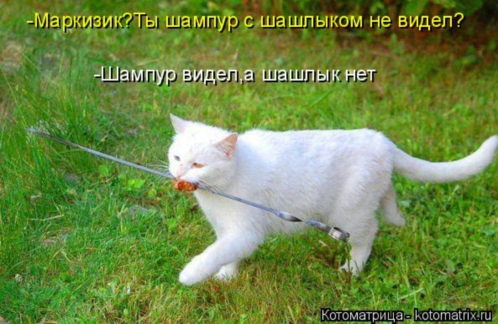 kotomatritsa_r (700x456, 311Kb)