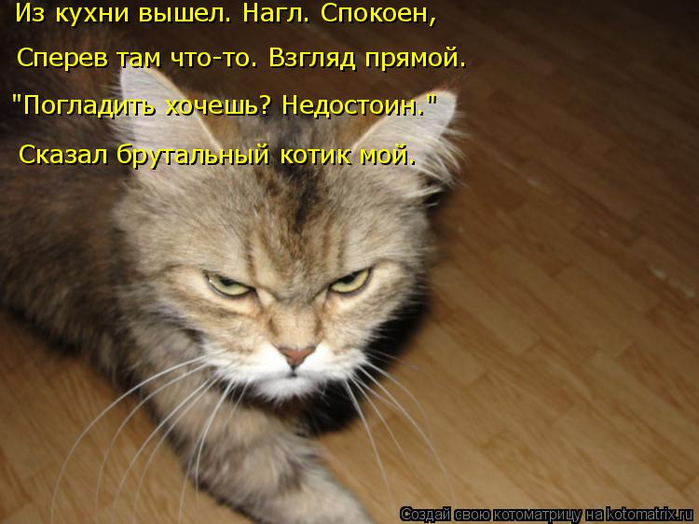 kotomatritsa_t (700x524, 330Kb)