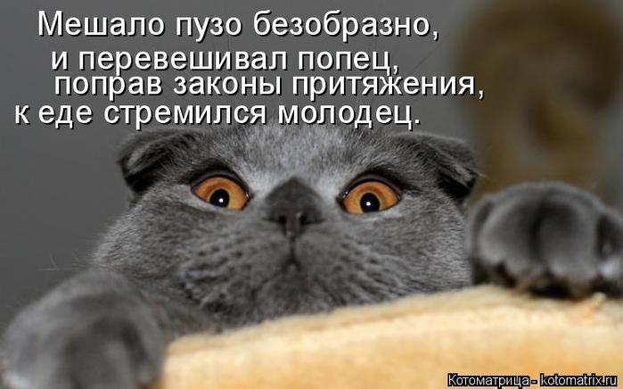 kotomatritsa_2 (700x436, 205Kb)