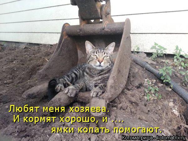 kotomatritsa_PO (600x450, 210Kb)