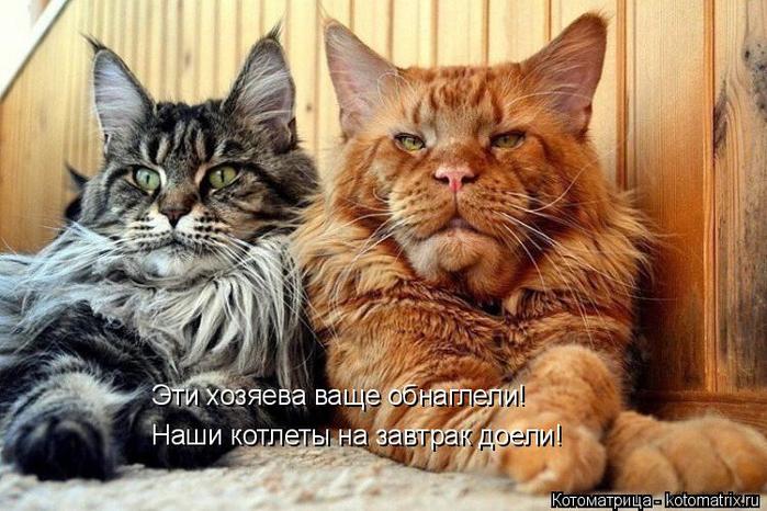 kotomatritsa_uO (700x466, 386Kb)