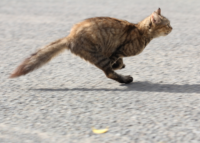 cat that hated me running away from me (640x458, 150Kb)