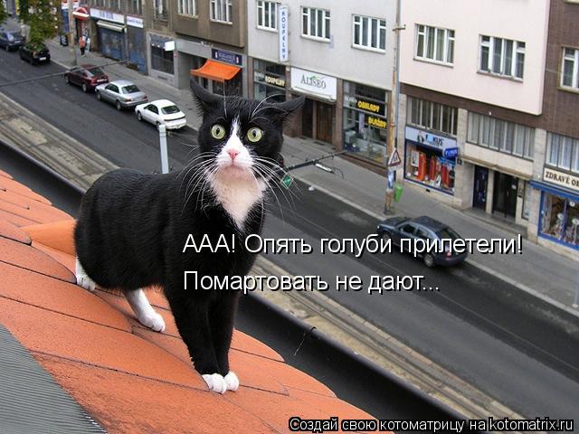 kotomatritsa_H (640x480, 220Kb)