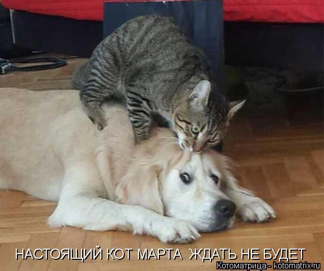 kotomatritsa_M (636x532, 144Kb)