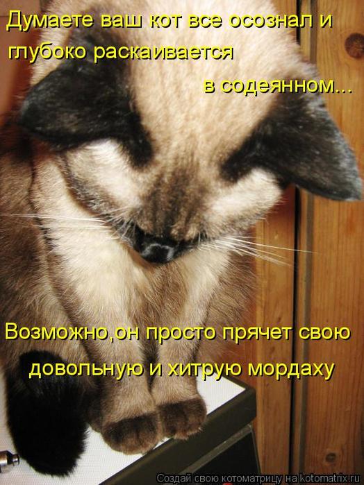 kotomatritsa_rw (524x700, 429Kb)