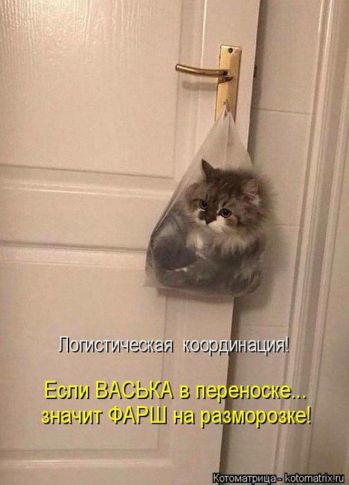 kotomatritsa_S (504x700, 308Kb)