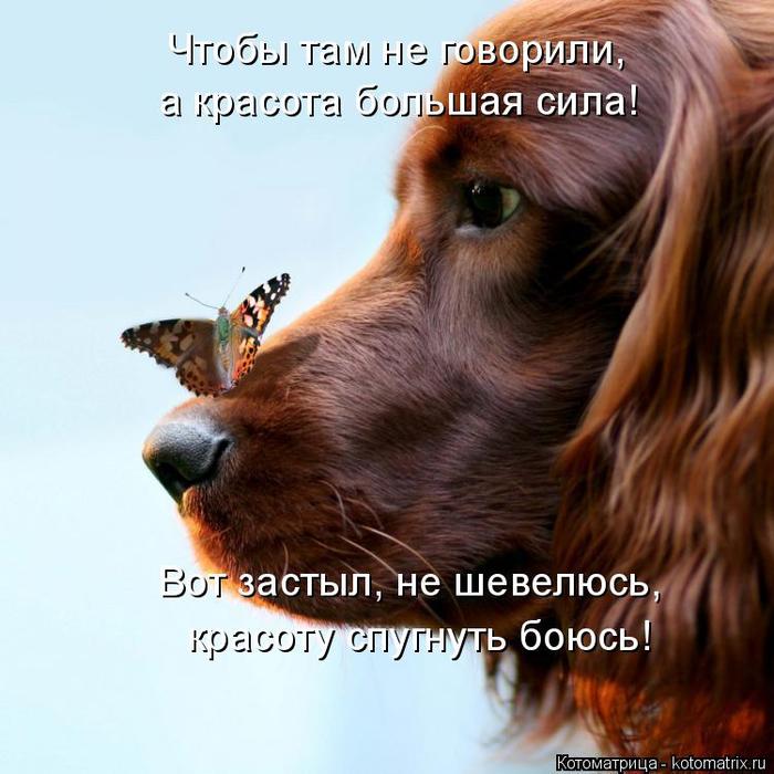 http://img1.liveinternet.ru/images/attach/d/0/142/142/142142765_0.jpg