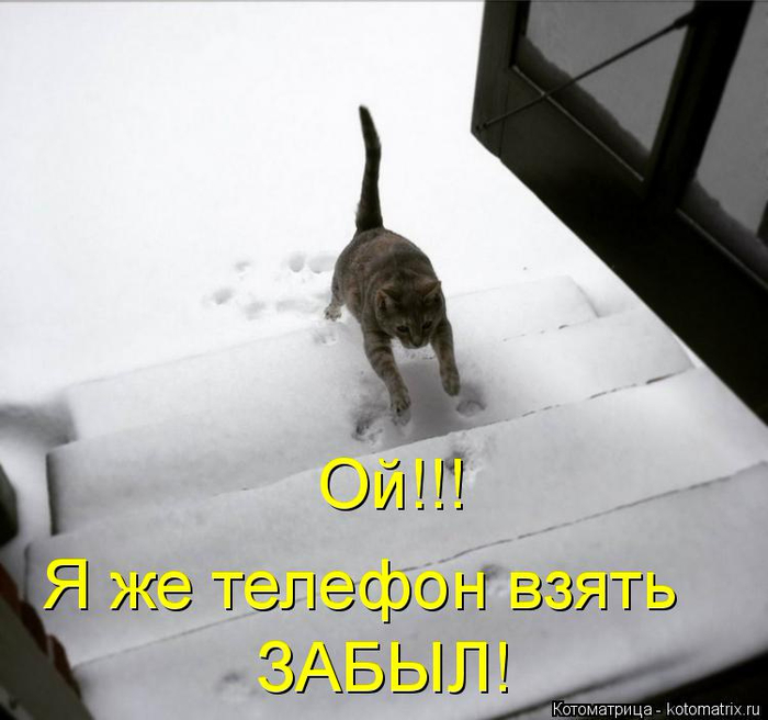 kotomatritsa_2 (700x656, 243Kb)