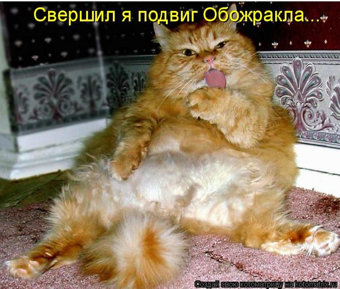 kotomatritsa_g (700x593, 451Kb)