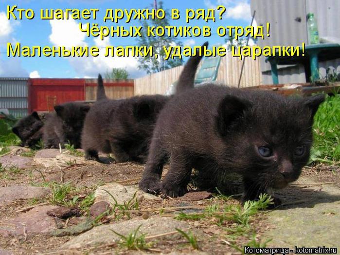 kotomatritsa_JN (700x524, 448Kb)
