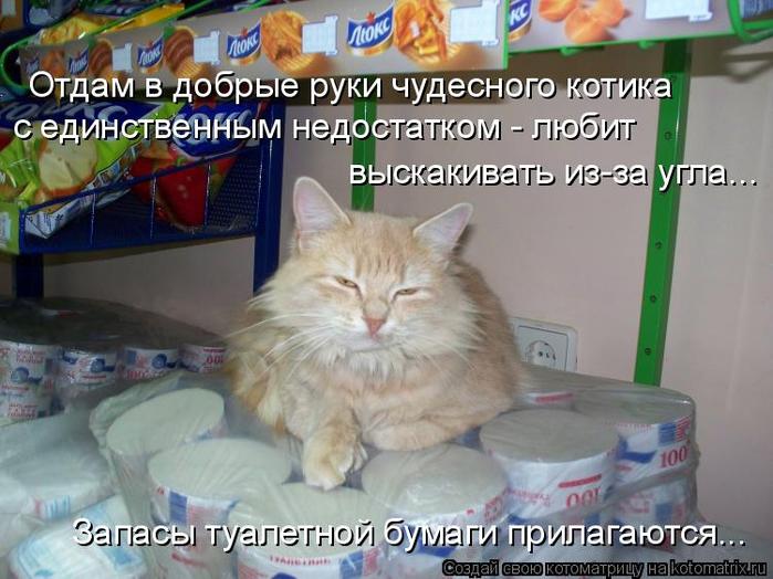 kotomatritsa_S (700x524, 364Kb)