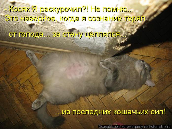 kotomatritsa_V (700x524, 402Kb)