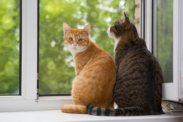2cats2 (700x466, 520Kb)