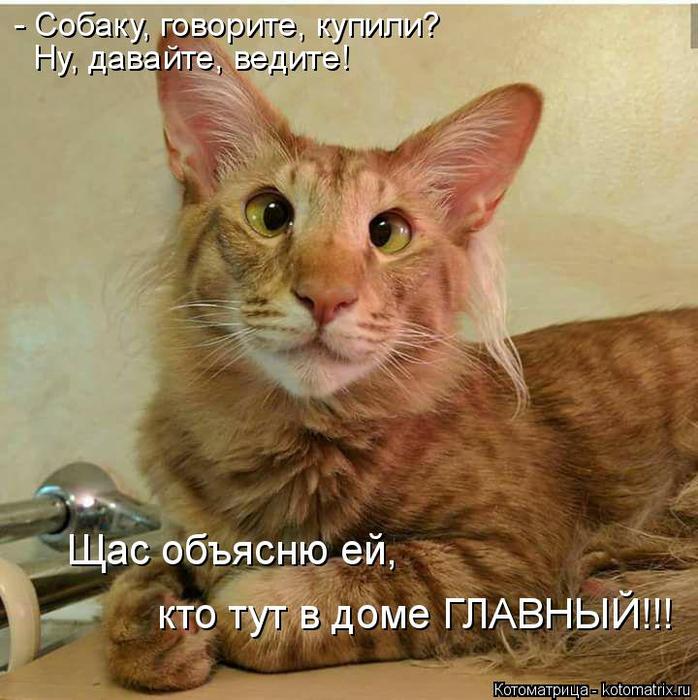 kotomatritsa_9u (698x700, 433Kb)