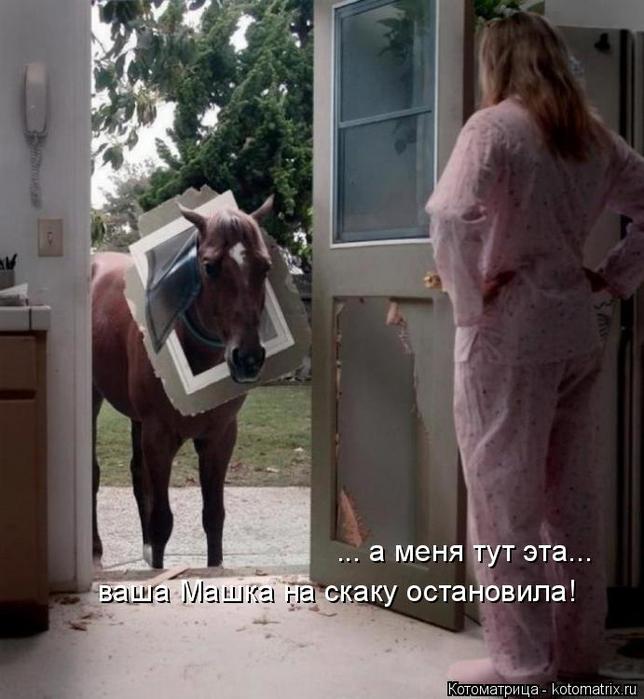 kotomatritsa_CZ (644x700, 320Kb)