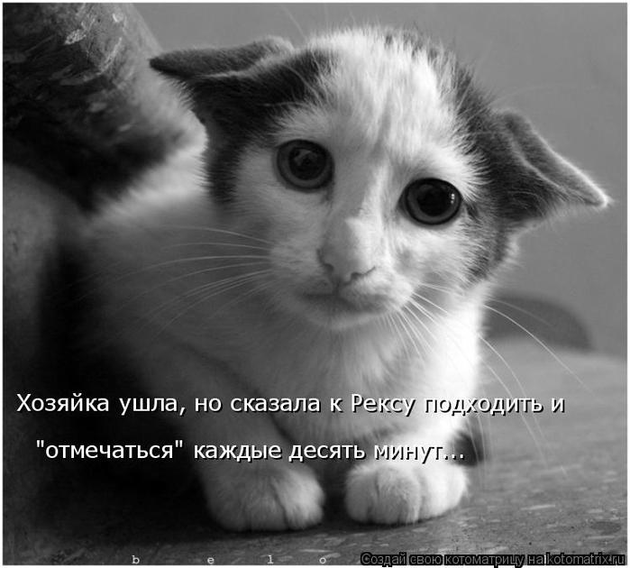 kotomatritsa_o (700x630, 204Kb)