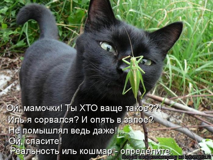 kotomatritsa_r9 (700x524, 410Kb)