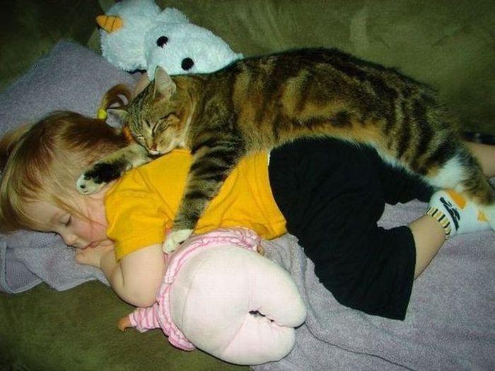 img_catsmob_com_20120308_00463_074 (700x525, 60Kb)