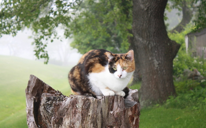 Cats_Tree_stump_451593_2880x1800 (700x437, 117Kb)